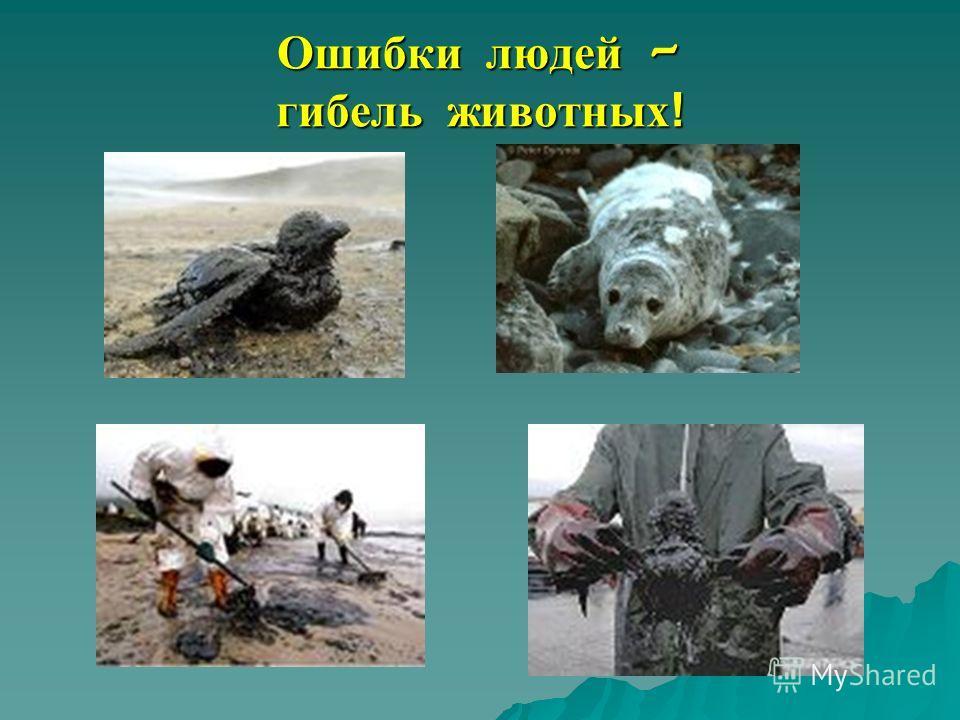 Ошибки людей – гибель животных!
