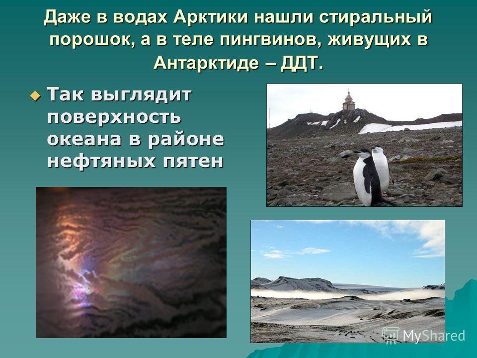 Даже в водах Арктики нашли стиральный порошок, а в теле пингвинов, живущих в Антарктиде – ДДТ. Так выглядит поверхность океана в районе нефтяных пятен Так выглядит поверхность океана в районе нефтяных пятен