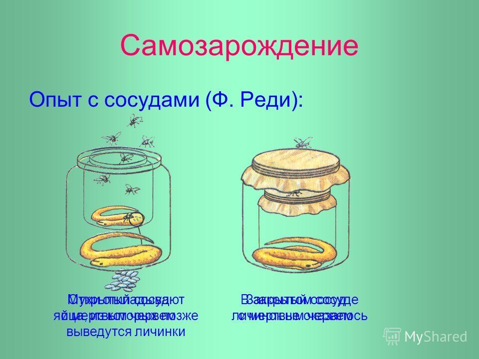 Самозарождение Опыт с сосудами (Ф. Реди): Мухи откладывают яйца, из которых позже выведутся личинки В закрытом сосуде личинок не оказалось Открытый сосуд с мертвым червем Закрытый сосуд с мертвым червем