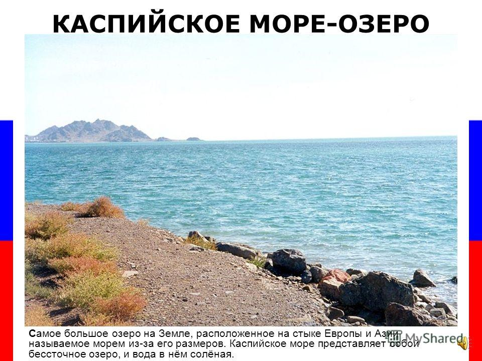 На Байкале живут редкие животные – нерпы, их так и называют байкальские нерпы.