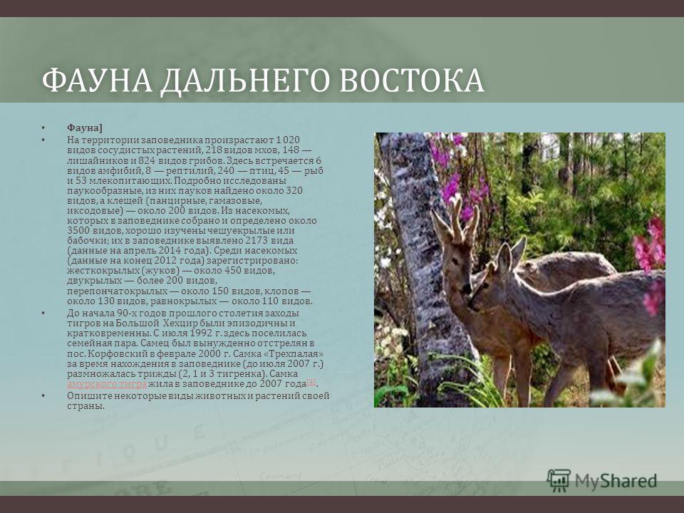 ФАУНА ДАЛЬНЕГО ВОСТОКАФАУНА ДАЛЬНЕГО ВОСТОКА Фауна] На территории заповедника произрастают 1 020 видов сосудистых растений, 218 видов мхов, 148 лишайников и 824 видов грибов. Здесь встречается 6 видов амфибий, 8 рептилий, 240 птиц, 45 рыб и 53 млекоп