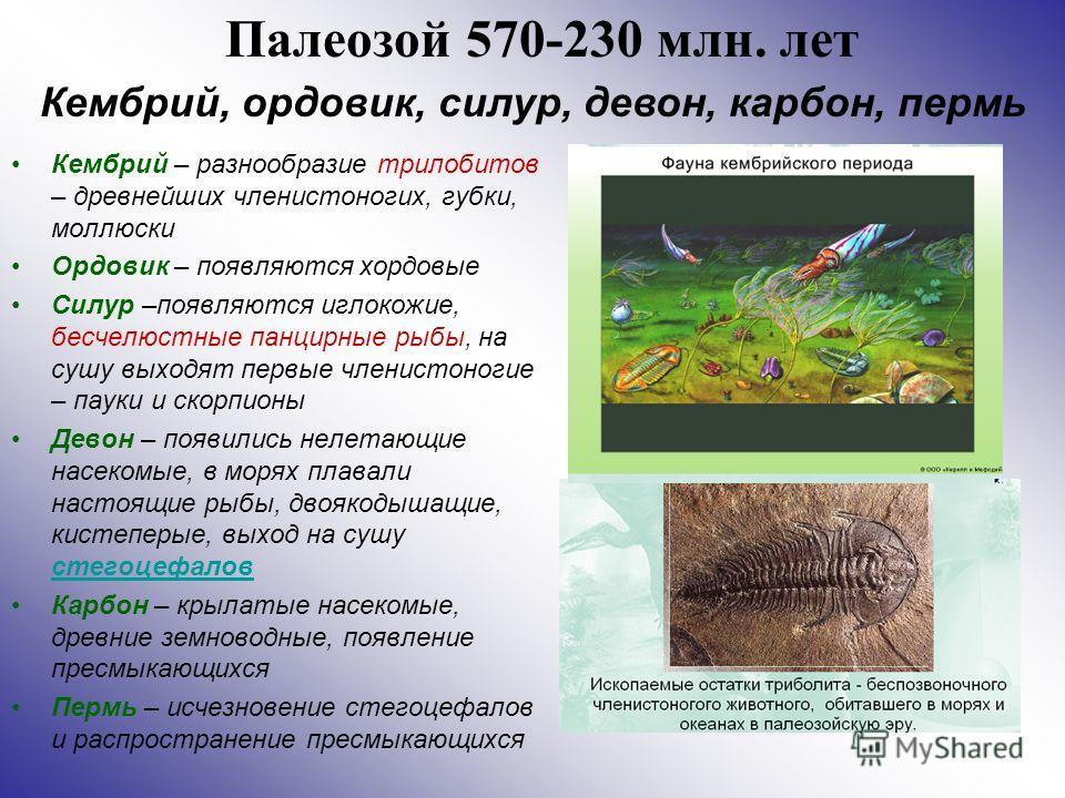 Палеозой 570-230 млн. лет Кембрий – разнообразие трилобитов – древнейших членистоногих, губки, моллюски Ордовик – появляются хордовые Силур –появляются иглокожие, бесчелюстные панцирные рыбы, на сушу выходят первые членистоногие – пауки и скорпионы Д