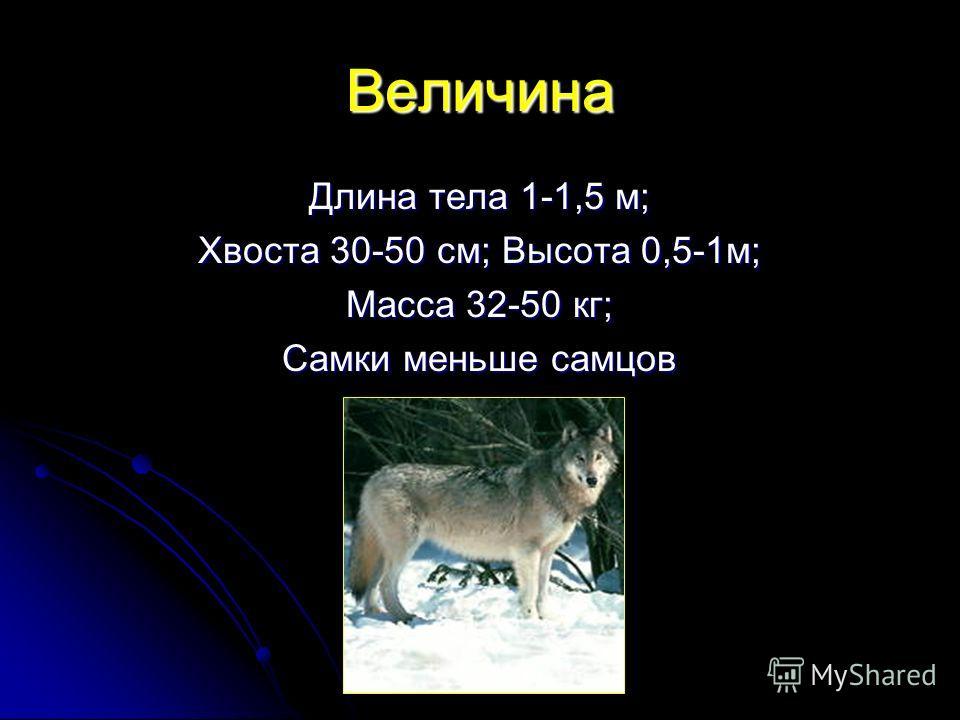 Величина Длина тела 1-1,5 м; Хвоста 30-50 см; Высота 0,5-1 м; Масса 32-50 кг; Самки меньше самцов