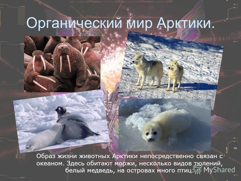 Органический мир Арктики. Образ жизни животных Арктики непосредственно связан с океаном. Здесь обитают моржи, несколько видов тюлений, белый медведь, на островах много птиц.
