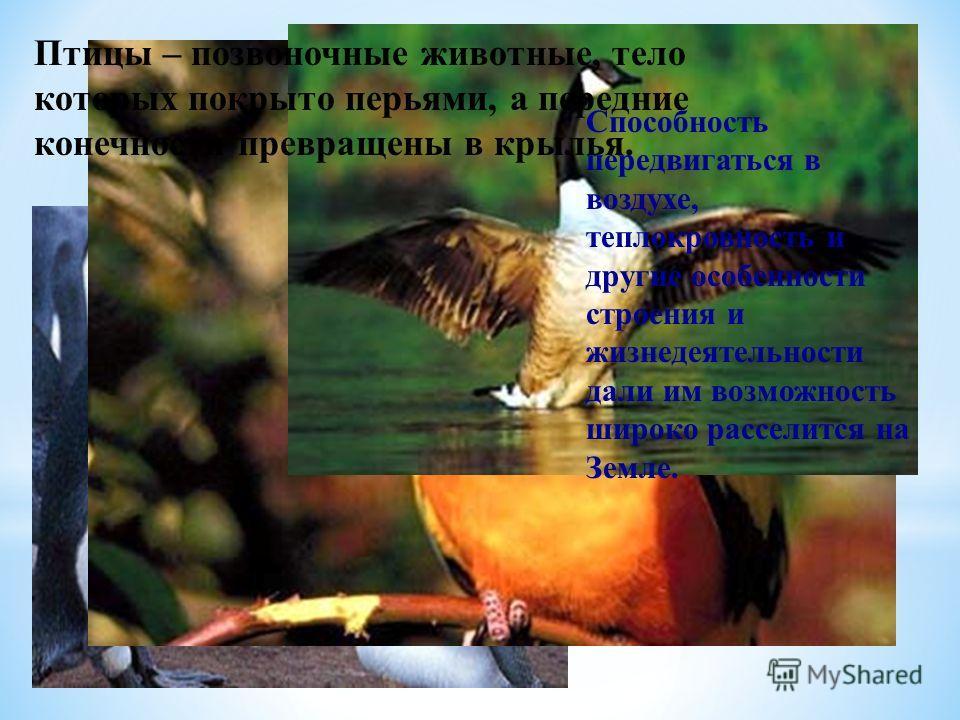 Птицы – позвоночные животные, тело которых покрыто перьями, а передние конечности превращены в крылья. Способность передвигаться в воздухе, теплокровность и другие особенности строения и жизнедеятельности дали им возможность широко расселится на Земл