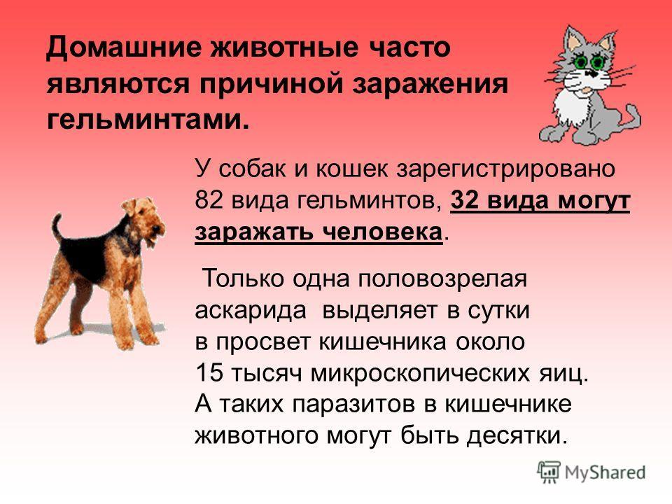 Домашние животные часто являются причиной заражения гельминтами. У собак и кошек зарегистрировано 82 вида гельминтов, 32 вида могут заражать человека. Только одна половозрелая аскарида выделяет в сутки в просвет кишечника около 15 тысяч микроскопичес