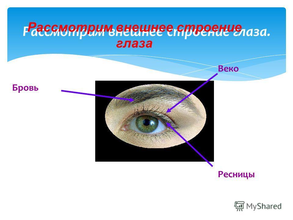 Рассмотрим внешнее строение глаза. Бровь Веко Ресницы Рассмотрим внешнее строение глаза