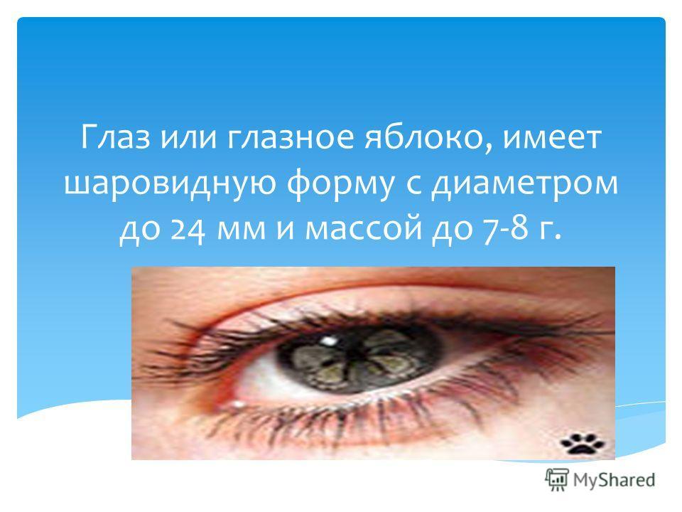 Глаз или глазное яблоко, имеет шаровидную форму с диаметром до 24 мм и массой до 7-8 г.