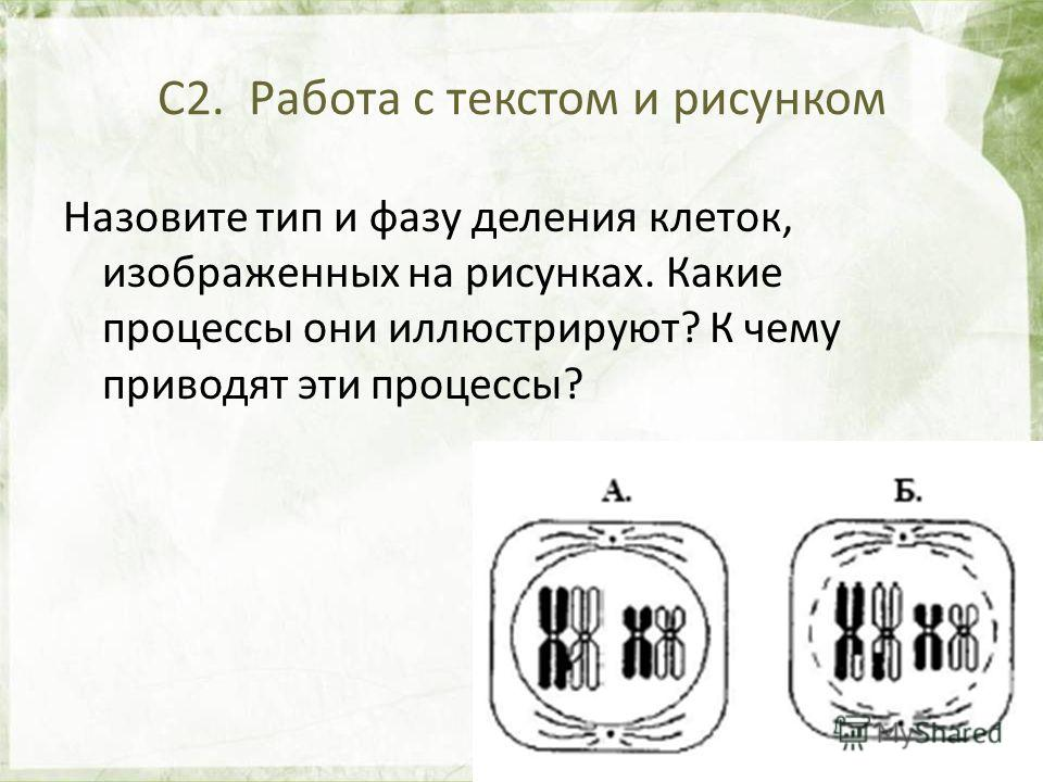 26 С2. Работа с текстом и рисунком Назовите тип и фазу деления клеток, изображенных на рисунках. Какие процессы они иллюстрируют? К чему приводят эти процессы?