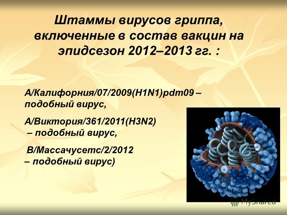 Штаммы вирусов гриппа, включенные в состав вакцин на эпидсезон 2012–2013 гг. : A/Калифорния/07/2009(H1N1)pdm09 – подобный вирус, A/Виктория/361/2011(H3N2) – подобный вирус, B/Массачусетс/2/2012 – подобный вирус)