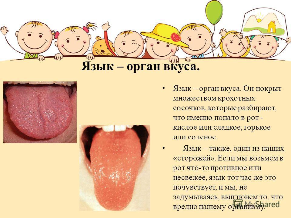 Язык – орган вкуса. Язык – орган вкуса. Он покрыт множеством крохотных сосочков, которые разбирают, что именно попало в рот - кислое или сладкое, горькое или соленое. Язык – также, один из наших «сторожей». Если мы возьмем в рот что-то противное или