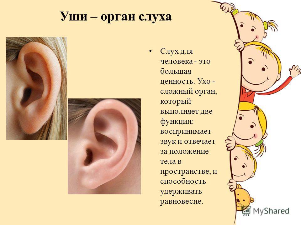 Уши – орган слуха Слух для человека - это большая ценность. Ухо - сложный орган, который выполняет две функции: воспринимает звук и отвечает за положение тела в пространстве, и способность удерживать равновесие.