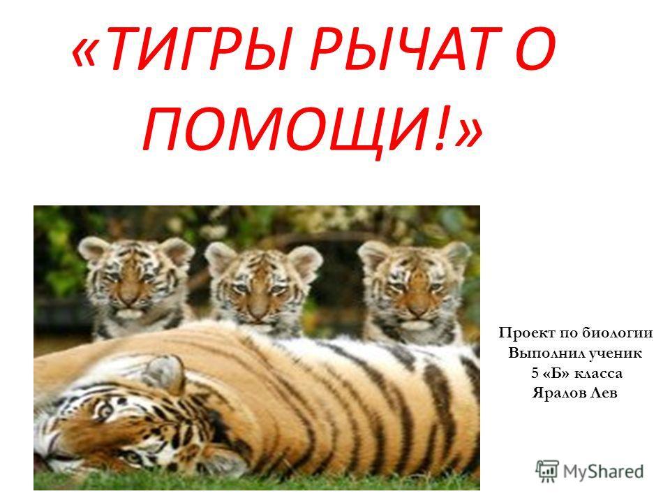 «ТИГРЫ РЫЧАТ О ПОМОЩИ!» Проект по биологии Выполнил ученик 5 «Б» класса Яралов Лев