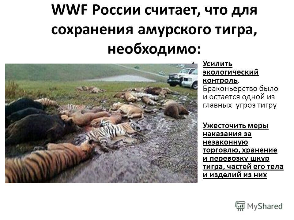 WWF России считает, что для сохранения амурского тигра, необходимо: Усилить экологический контроль. Браконьерство было и остается одной из главных угроз тигру Ужесточить меры наказания за незаконную торговлю, хранение и перевозку шкур тигра, частей е