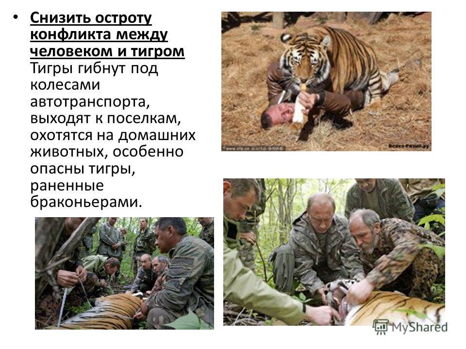 Снизить остроту конфликта между человеком и тигром Тигры гибнут под колесами автотранспорта, выходят к поселкам, охотятся на домашних животных, особенно опасны тигры, раненные браконьерами.
