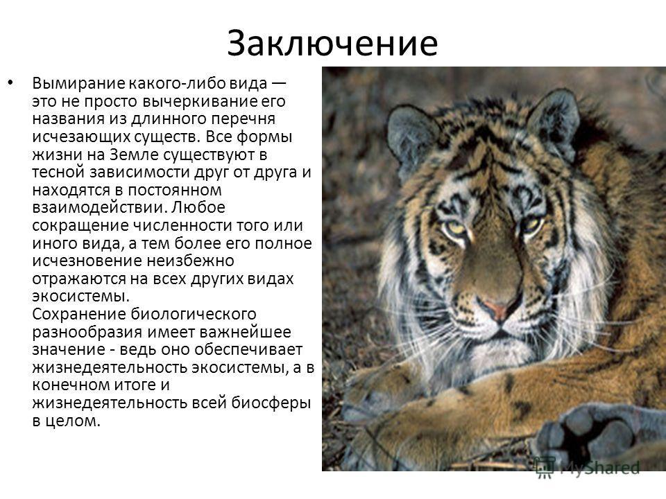 Заключение Вымирание какого-либо вида это не просто вычеркивание его названия из длинного перечня исчезающих существ. Все формы жизни на Земле существуют в тесной зависимости друг от друга и находятся в постоянном взаимодействии. Любое сокращение чис
