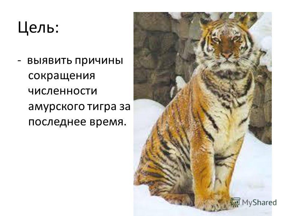 Цель: - выявить причины сокращения численности амурского тигра за последнее время.