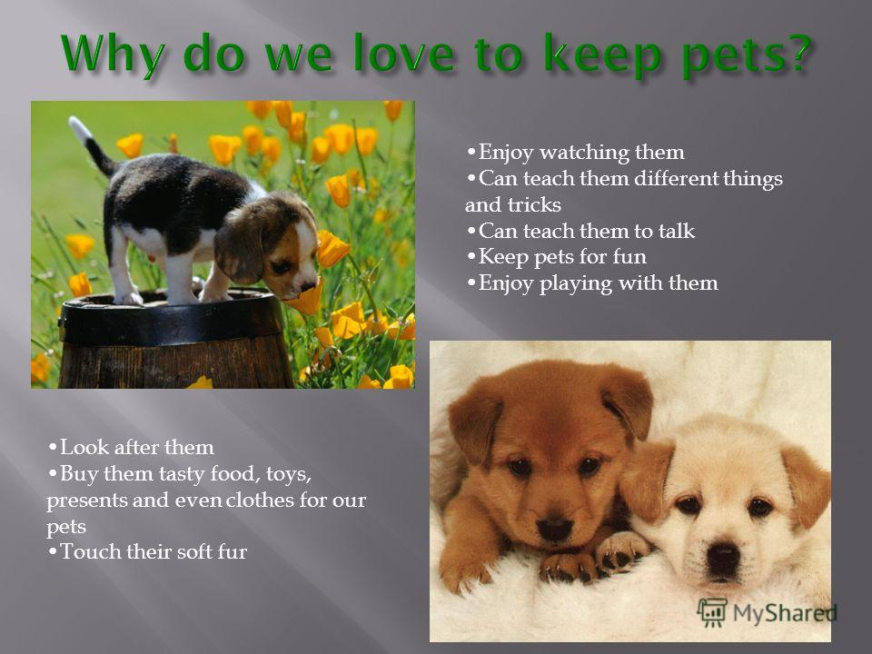 Why do we love to keep pets? Enjoy watching them Can teach them different things and tricks Can teach them to talk Keep pets for fun Enjoy playing with them Look after them Buy them tasty food, toys, presents and even clothes for our pets Touch their