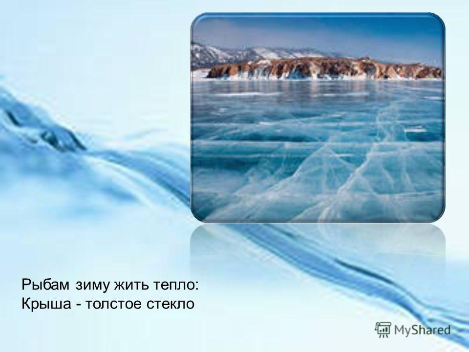 Рыбам зиму жить тепло: Крыша - толстое стекло