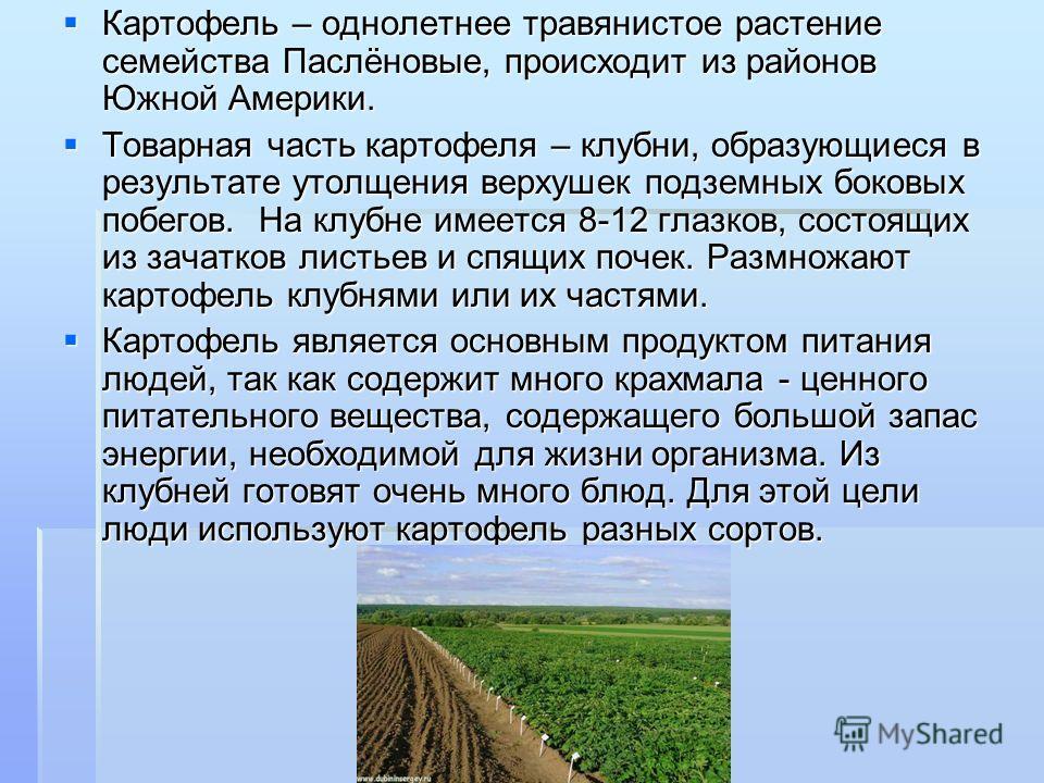 Картофель – однолетнее травянистое растение семейства Паслёновые, происходит из районов Южной Америки. Картофель – однолетнее травянистое растение семейства Паслёновые, происходит из районов Южной Америки. Товарная часть картофеля – клубни, образующи