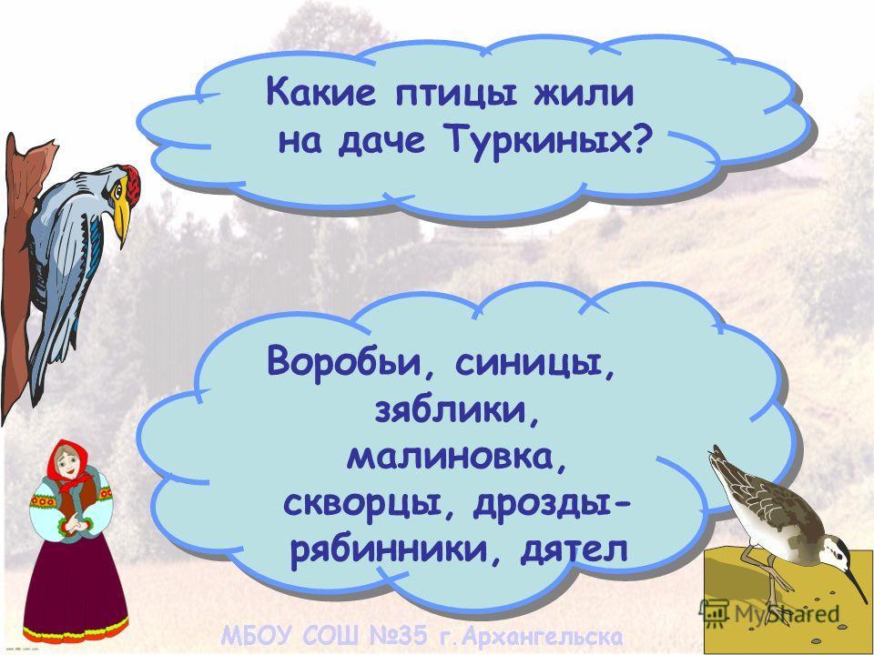 Какие птицы жили на даче Туркиных? Воробьи, синицы, зяблики, малиновка, скворцы, дрозды- рябинники, дятел