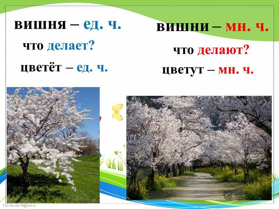FokinaLida.75@mail.ru вишня вишни что делает? что делают? цветёт цветут – ед. ч. – мн. ч. – ед. ч. – мн. ч.