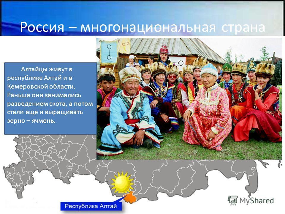 Россия – многонациональная страна Алтайцы живут в республике Алтай и в Кемеровской области. Раньше они занимались разведением скота, а потом стали еще и выращивать зерно – ячмень.