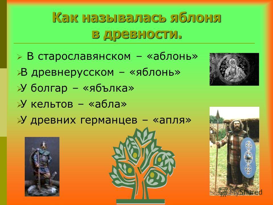 Как называлась яблоня в древности. В старославянском – «аблонь» В древнерусском – «яблонь» У болгар – «ябълка» У кельтов – «абла» У древних германцев – «апля»