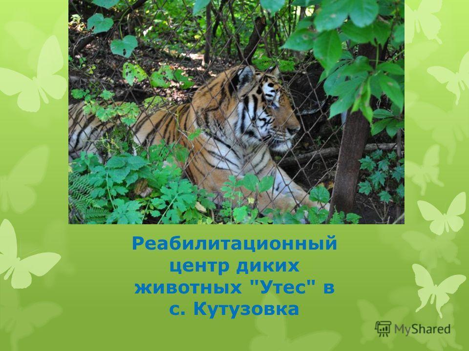 Реабилитационный центр диких животных Утес в с. Кутузовка