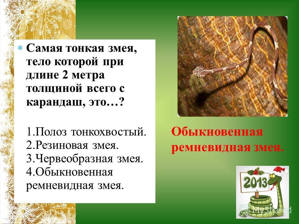 Самая тонкая змея, тело которой при длине 2 метра толщиной всего с карандаш, это…? 1. Полоз тонкохвостый. 2. Резиновая змея. 3. Червеобразная змея. 4. Обыкновенная ремневидная змея. Обыкновенная ремневидная змея.