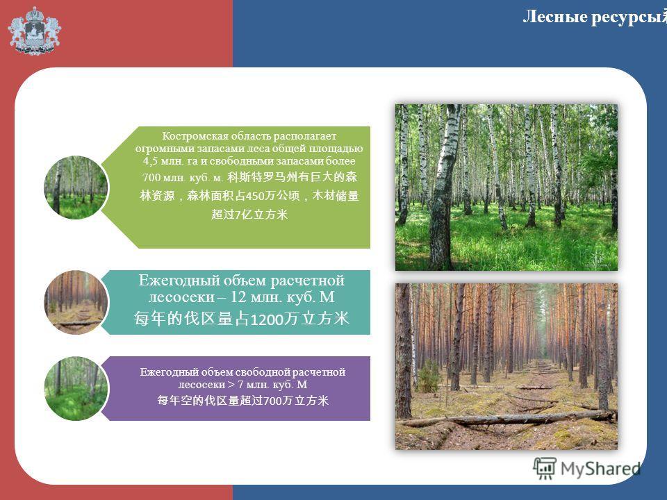Костромская область располагает огромными запасами леса общей площадью 4,5 млн. га и свободными запасами более 700 млн. куб. м. 450 7 Ежегодный объем расчетной лесосеки – 12 млн. куб. М 1200 Ежегодный объем свободной расчетной лесосеки > 7 млн. куб.