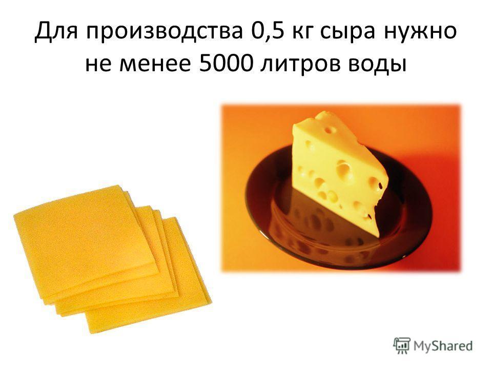 Для производства 0,5 кг сыра нужно не менее 5000 литров воды