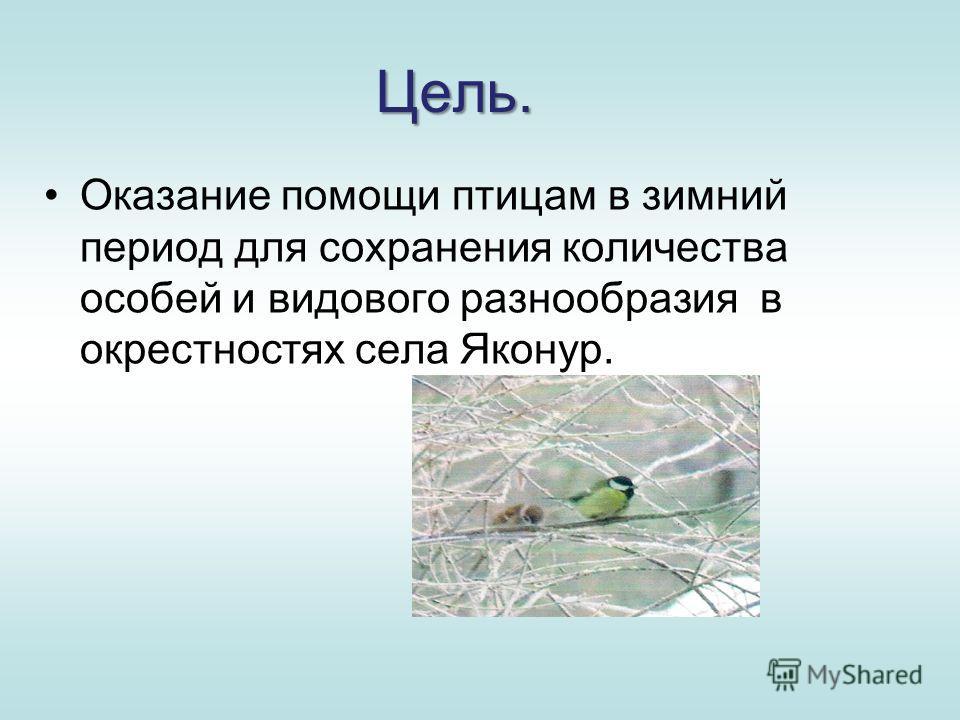 Цель. Оказание помощи птицам в зимний период для сохранения количества особей и видового разнообразия в окрестностях села Яконур.