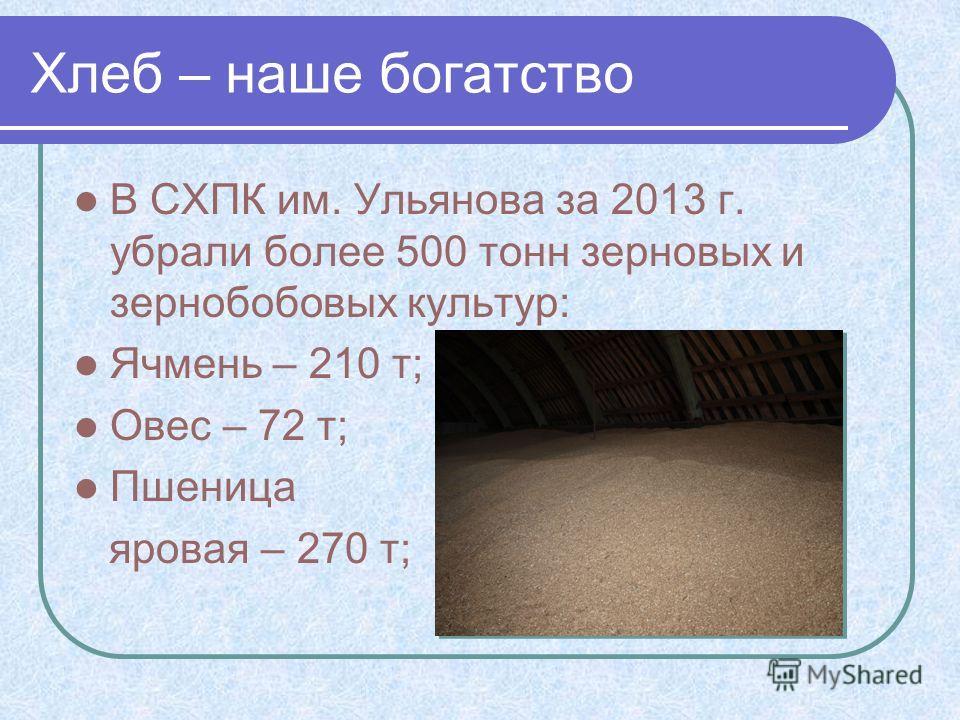 Хлеб – наше богатство В СХПК им. Ульянова за 2013 г. убрали более 500 тонн зерновых и зернобобовых культур: Ячмень – 210 т; Овес – 72 т; Пшеница яровая – 270 т;