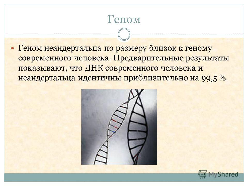 Геном Геном неандертальца по размеру близок к геному современного человека. Предварительные результаты показывают, что ДНК современного человека и неандертальца идентичны приблизительно на 99,5 %.