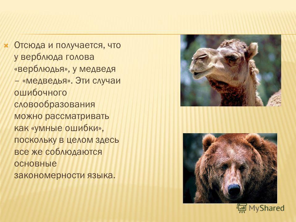 Отсюда и получается, что у верблюда голова «верблюдья», у медведя – «медведья». Эти случаи ошибочного словообразования можно рассматривать как «умные ошибки», поскольку в целом здесь все же соблюдаются основные закономерности языка.