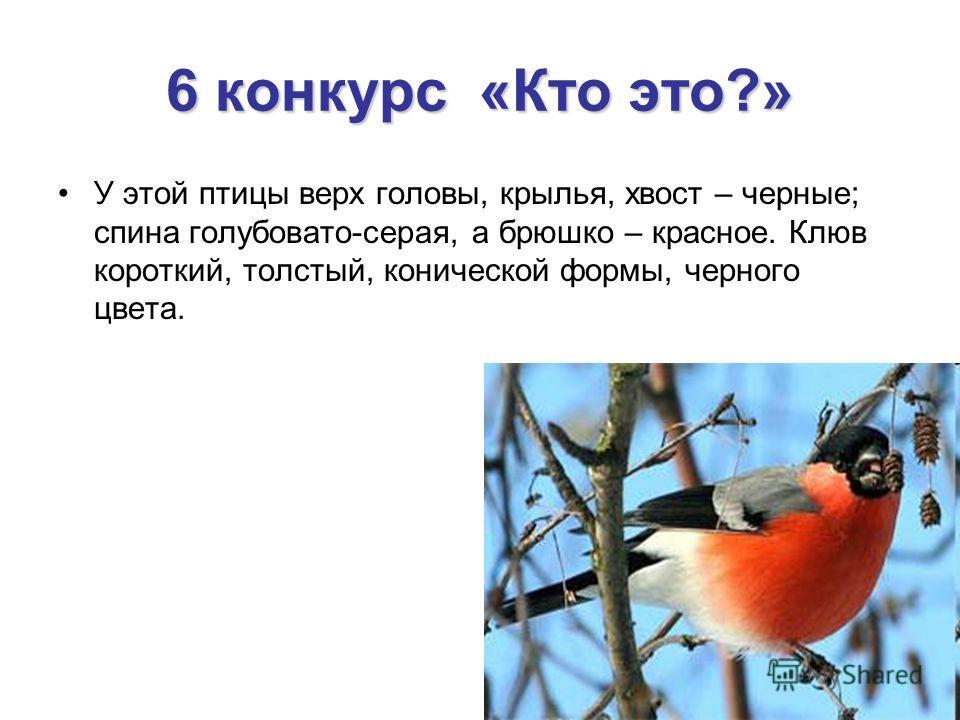 6 конкурс «Кто это?» У этой птицы верх головы, крылья, хвост – черные; спина голубовато-серая, а брюшко – красное. Клюв короткий, толстый, конической формы, черного цвета.
