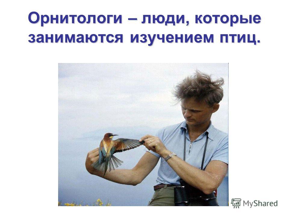Орнитологи – люди, которые занимаются изучением птиц.