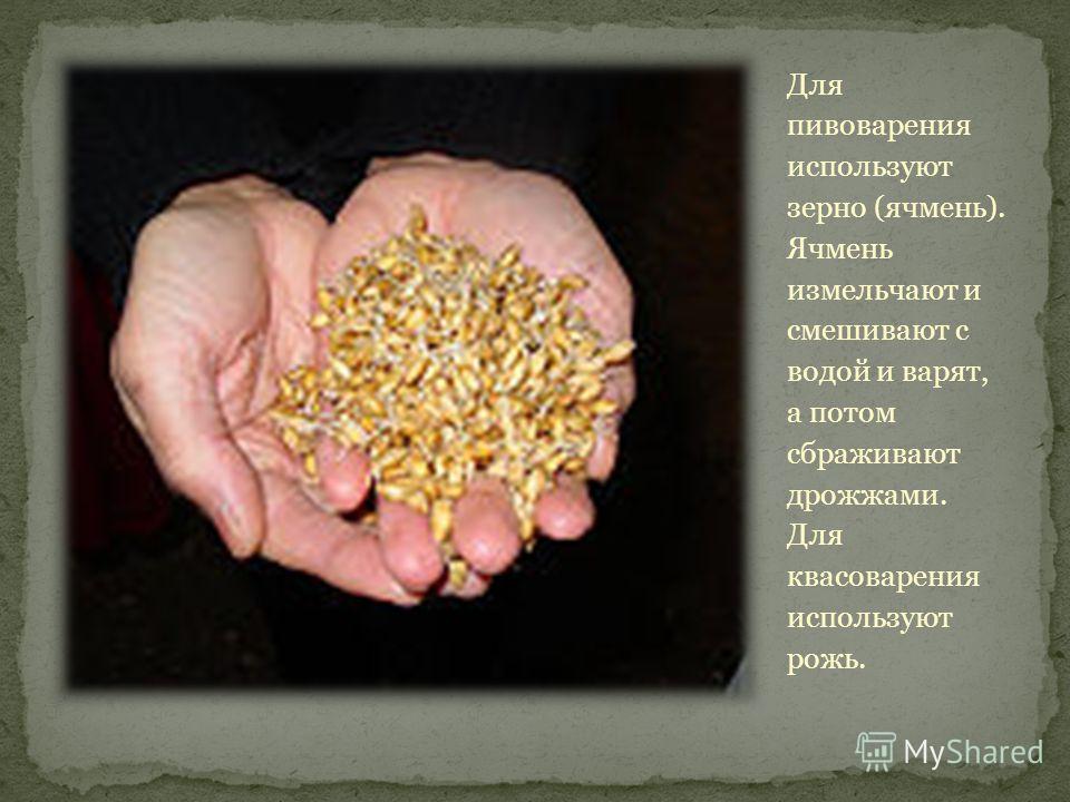 Для пивоварения используют зерно (ячмень). Ячмень измельчают и смешивают с водой и варят, а потом сбраживают дрожжами. Для квасоварения используют рожь.