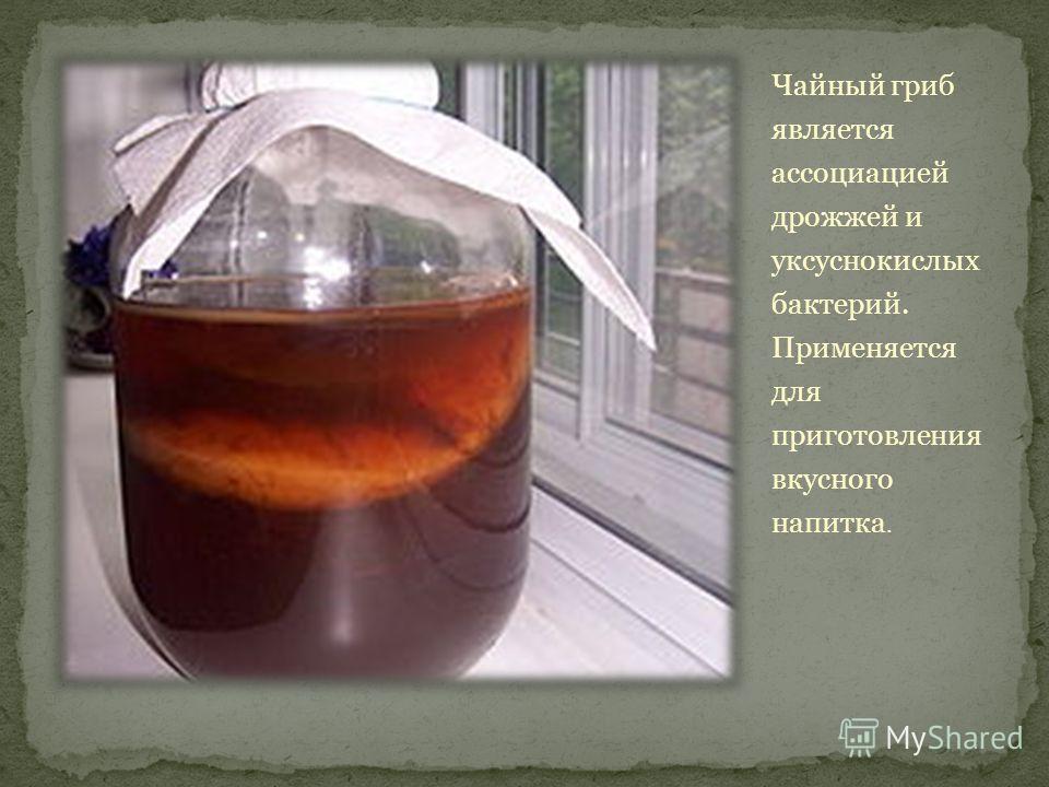 Чайный гриб является ассоциацией дрожжей и уксуснокислых бактерий. Применяется для приготовления вкусного напитка.