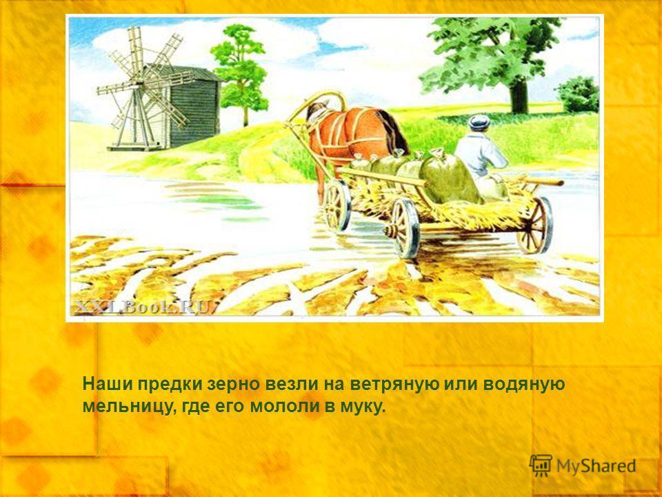 Наши предки зерно везли на ветряную или водяную мельницу, где его мололи в муку.