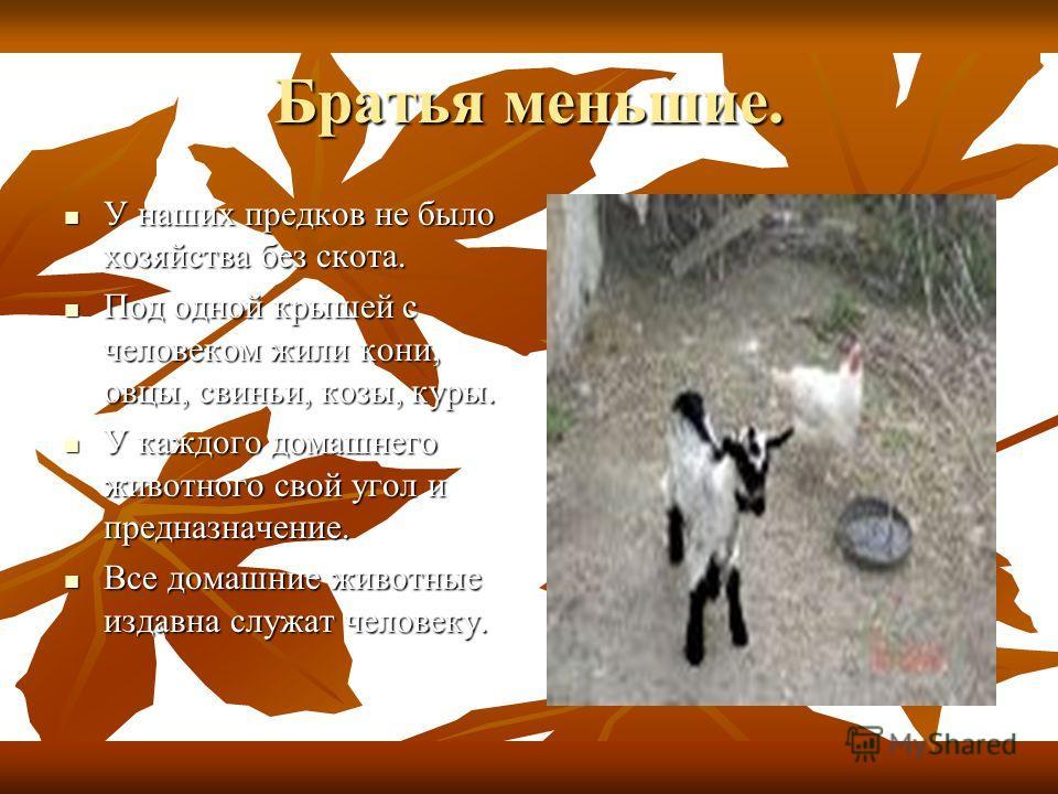 Братья меньшие. У наших предков не было хозяйства без скота. У наших предков не было хозяйства без скота. Под одной крышей с человеком жили кони, овцы, свиньи, козы, куры. Под одной крышей с человеком жили кони, овцы, свиньи, козы, куры. У каждого до