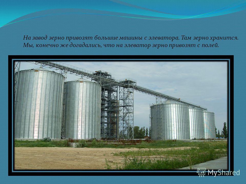 На завод зерно привозят большие машины с элеватора. Там зерно хранится. Мы, конечно же догадались, что на элеватор зерно привозят с полей.