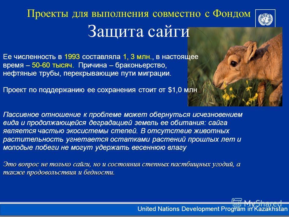 Kazakhstan United Nations Development Program in Kazakhstan Ее численность в 1993 составляла 1, 3 млн., в настоящее время – 50-60 тысяч. Причина – браконьерство, нефтяные трубы, перекрывающие пути миграции. Проект по поддержанию ее сохранения стоит о