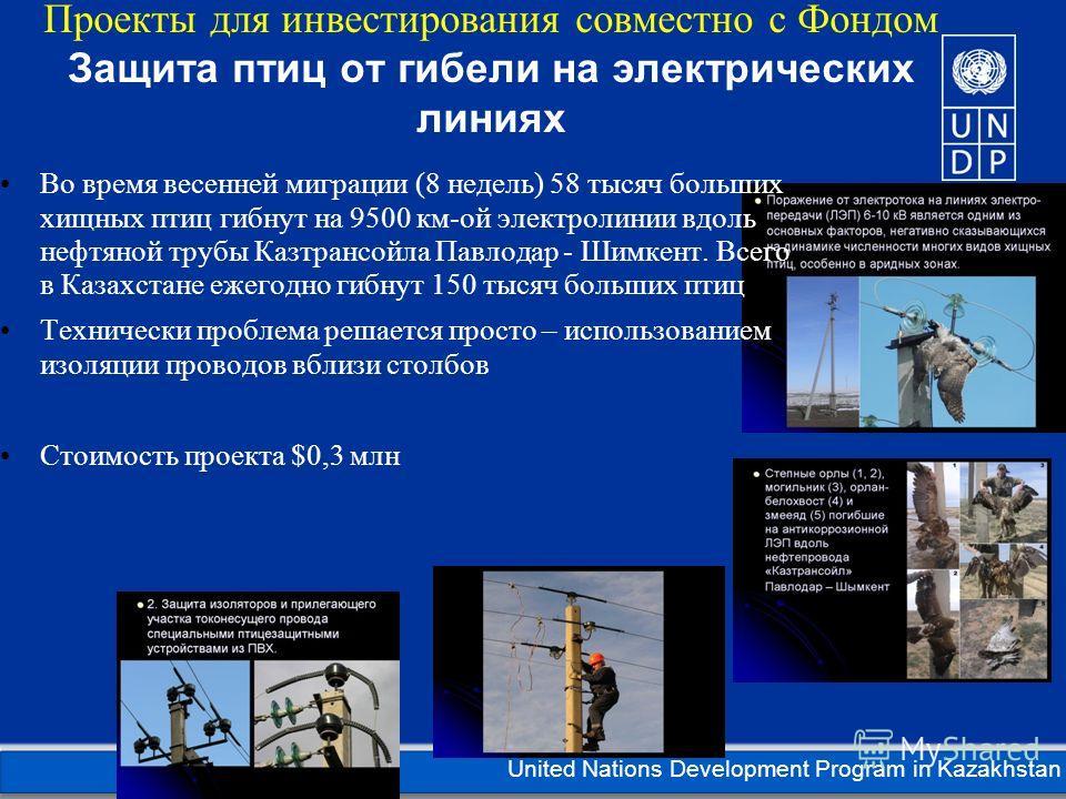 Kazakhstan United Nations Development Program in Kazakhstan Проекты для инвестирования совместно с Фондом Защита птиц от гибели на электрических линиях Во время весенней миграции (8 недель) 58 тысяч больших хищных птиц гибнут на 9500 км-ой электролин