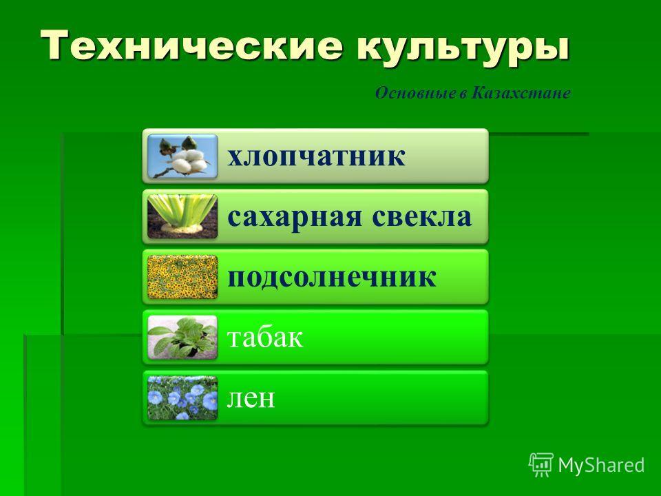 Технические культуры хлопчатник сахарная свекла подсолнечник табак лен Основные в Казахстане