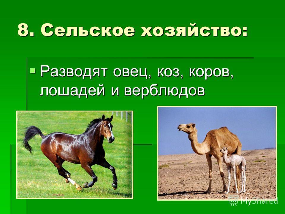 8. Сельское хозяйство: Разводят овец, коз, коров, лошадей и верблюдов Разводят овец, коз, коров, лошадей и верблюдов