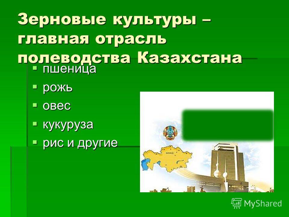 Зерновые культуры – главная отрасль полеводства Казахстана пшеница пшеница рожь рожь овес овес кукуруза кукуруза рис и другие рис и другие