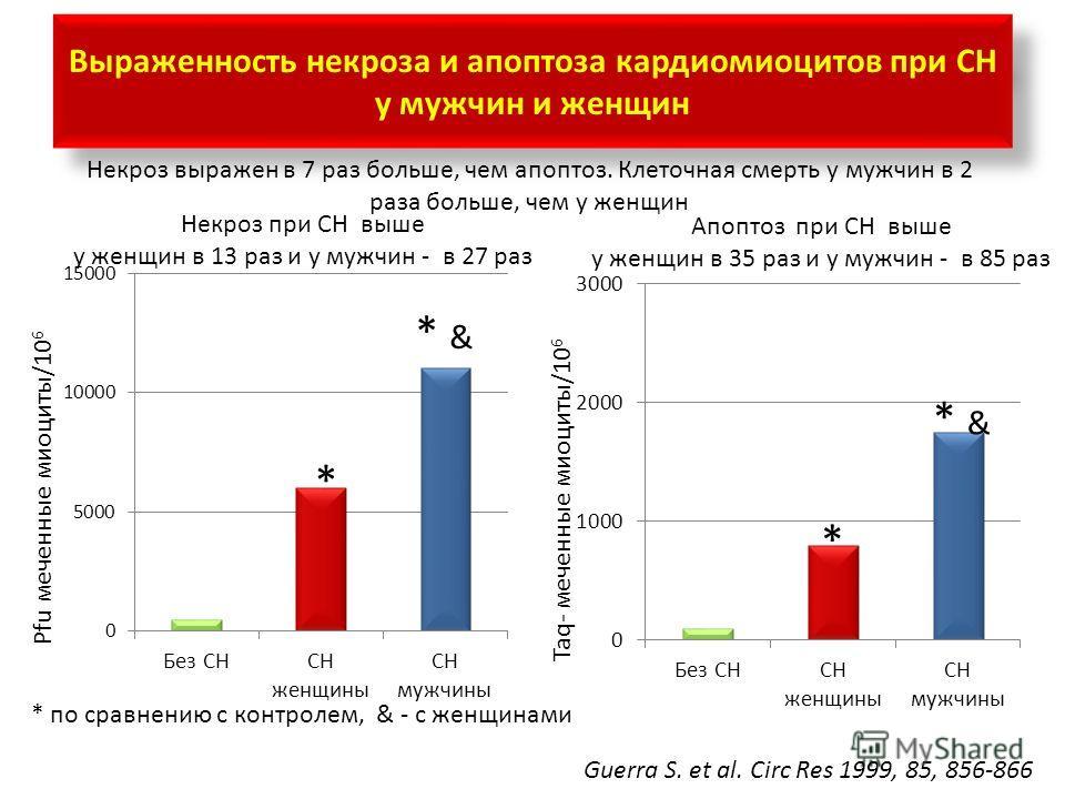 Выраженность некроза и апоптоза кардиомиоцитов при СН у мужчин и женщин Pfu меченные миоциты/10 6 Некроз при СН выше у женщин в 13 раз и у мужчин - в 27 раз Апоптоз при СН выше у женщин в 35 раз и у мужчин - в 85 раз Guerra S. et al. Circ Res 1999, 8
