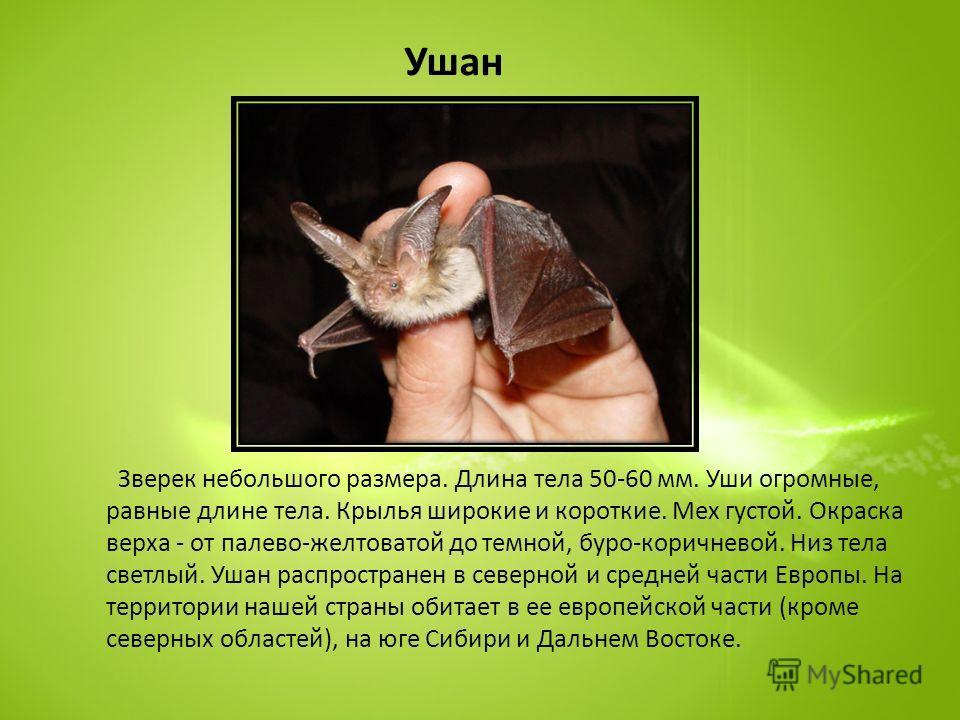 Ушан Зверек небольшого размера. Длина тела 50-60 мм. Уши огромные, равные длине тела. Крылья широкие и короткие. Мех густой. Окраска верха - от палево-желтоватой до темной, буро-коричневой. Низ тела светлый. Ушан распространен в северной и средней ча